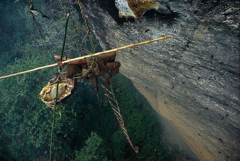 Honey Hunters of Nepal -