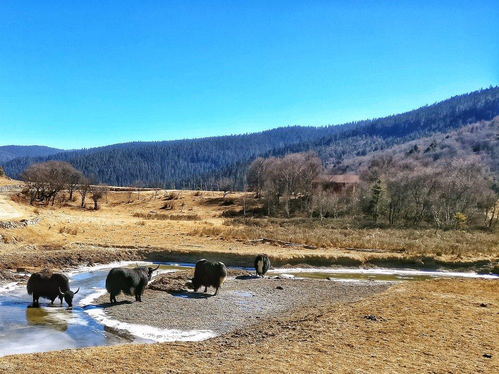 shudulake-potatsonationalpark-yunnan-world-heritage-site
