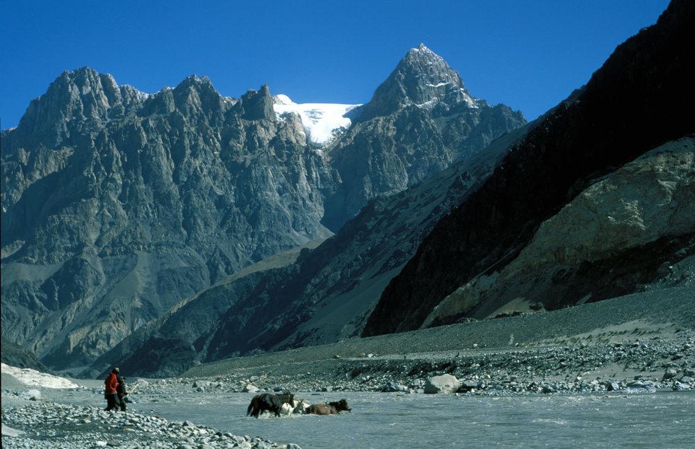 The famous Karakoram Mules crossing the Shyok river at Saser Brangza on their way to Chongtash, Murgo... KK Pass.