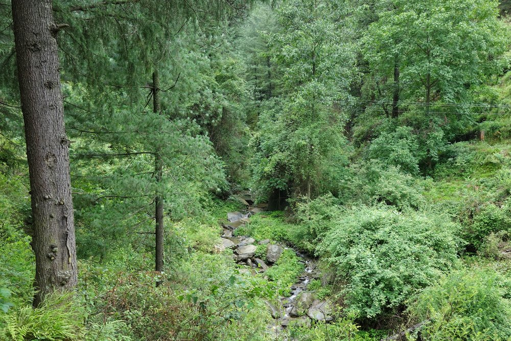 The Koku Nallah running through the thick forests