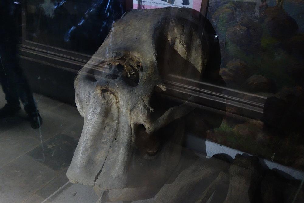kashmir-mammoth-sps-museum