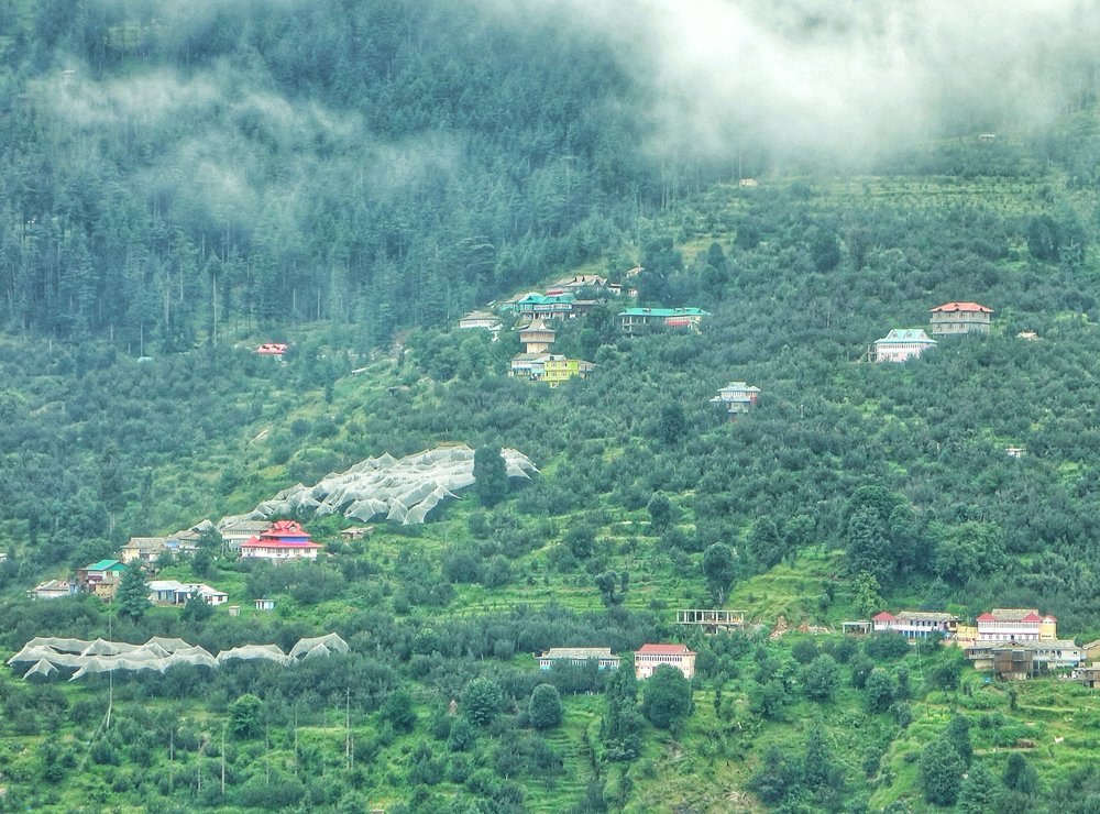 apple-orchards-kotkhai