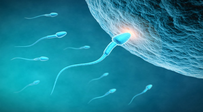 male fertility -