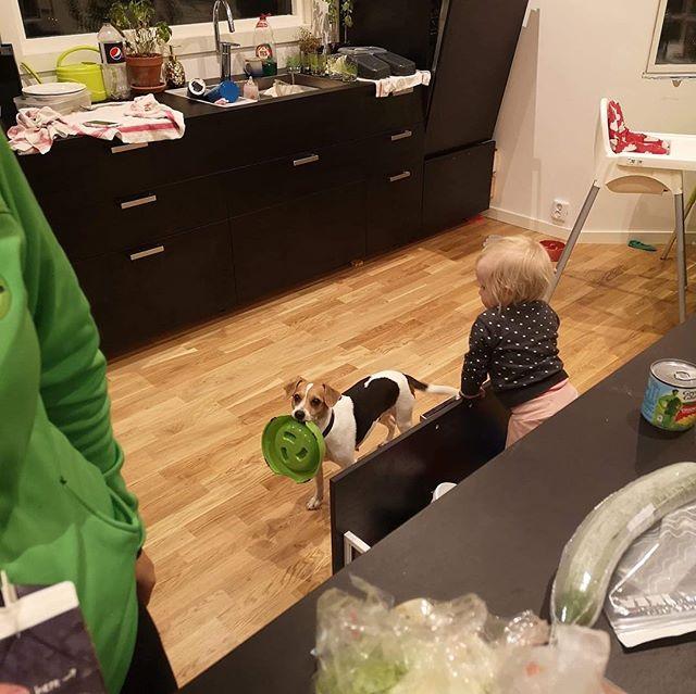 När hunden tycker det är dags för middag 😍😂 #yacatisbabebacktokitenga #realfärskfoder #realfamiljen #dansksvenskgårdshund #danishswedishfarmdog #vimeddsg