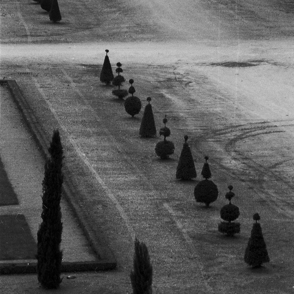 Versailles_trees_edit.jpg