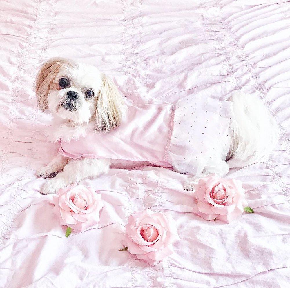 My dog Cupcake is a true princess!