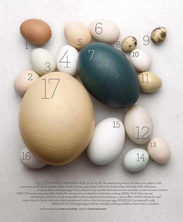Eggs_L0408WELBF-1.jpg