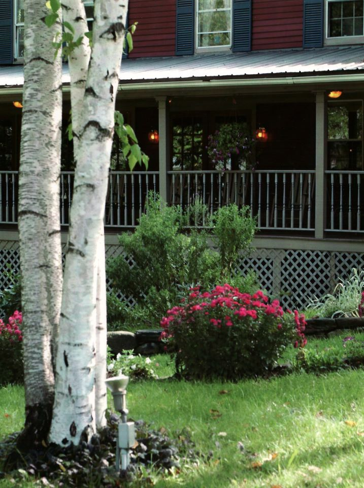 Outside front porch with white birch trees.jpg