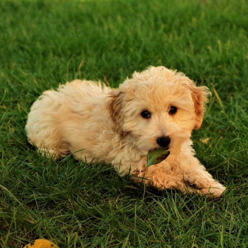 Best Buddies Canine Comforts & Training