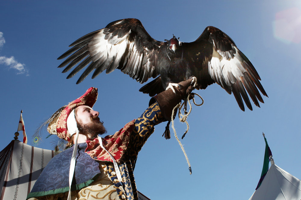 Eagle trainer, Abbey Medieval Festival.