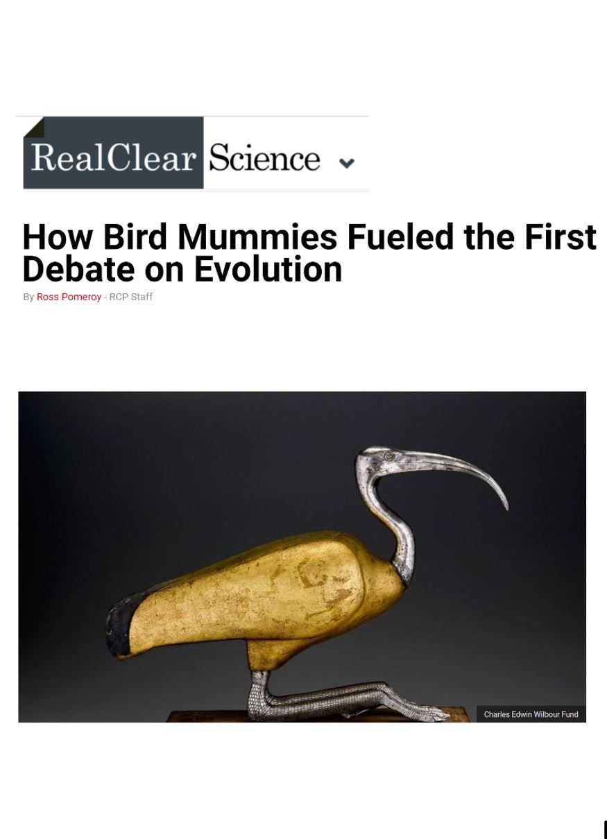 real clear science mummies2.JPG