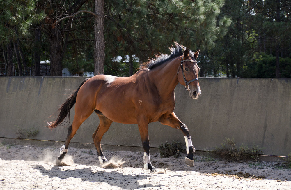 Unlock Your horse's potential - Advance your horse's trainingStrengthen your bond with your horseImprove your riding