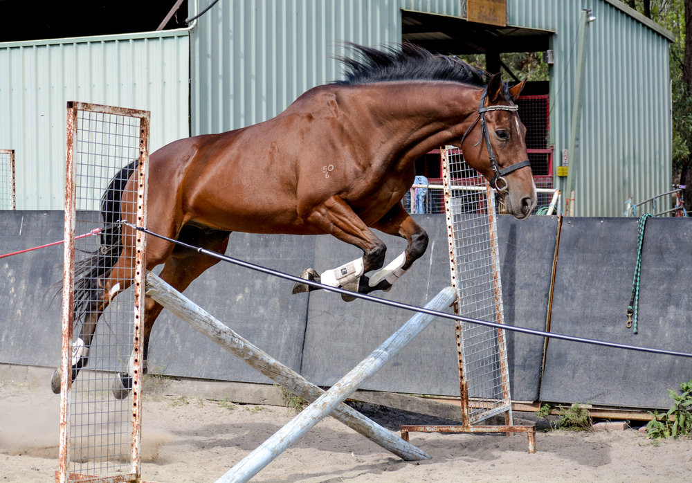 Is your horse fitter than you?