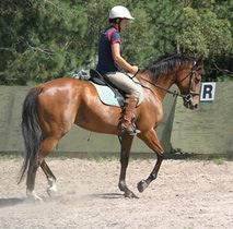 horseyard_nakari.jpg