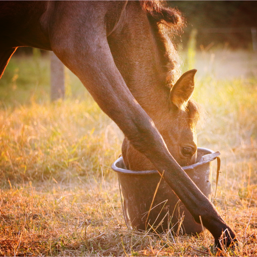 what nutrients does your horse need?