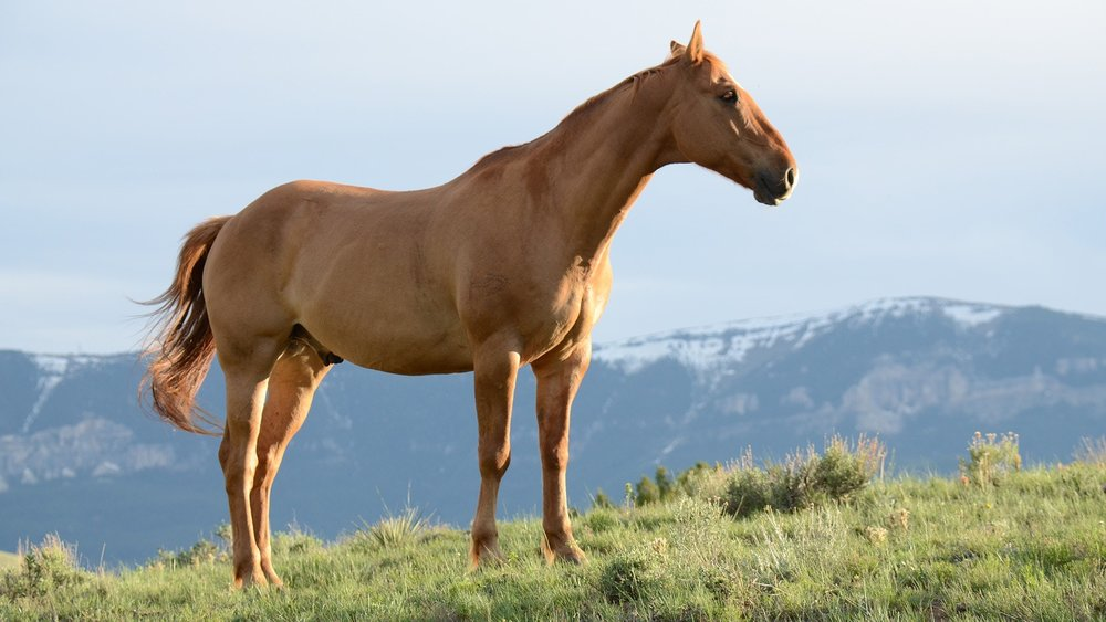 are you letting your horse down?