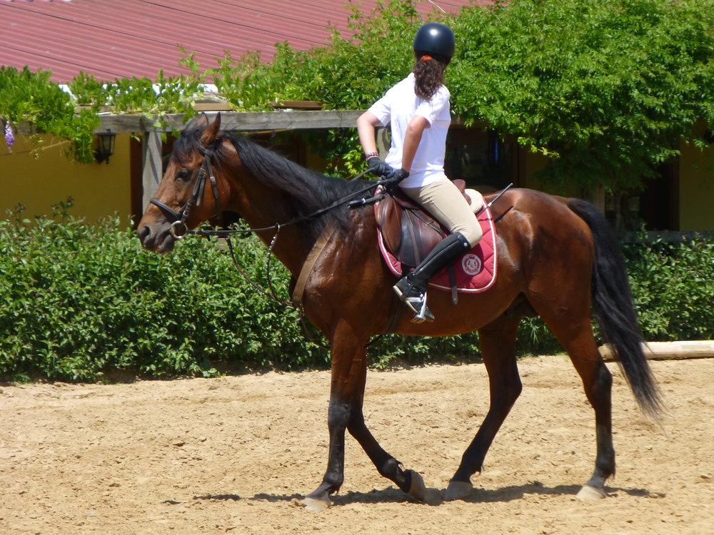 Riding_a_Horse_Backwards_1110787.jpg