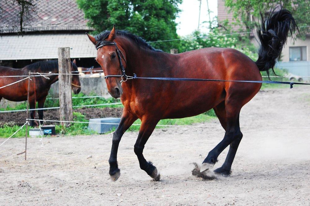 horse adapting