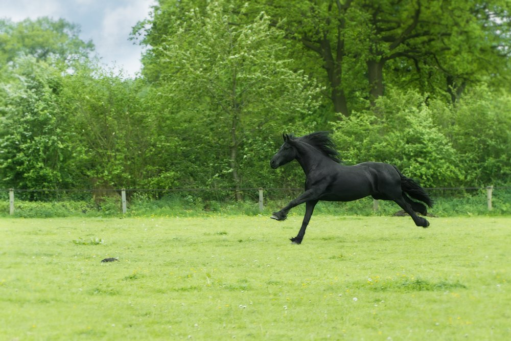 why wont my horse canter?