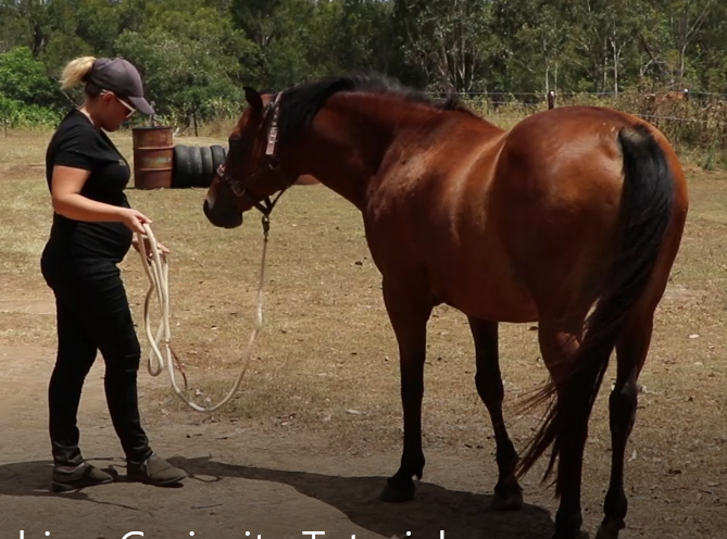 Many amazing horses shared their time with us during the creation of the tutorials. Raf loves his time with Katie (and her quickly growing baby bump!)