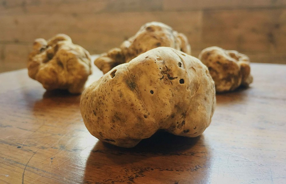 White-truffle-iPhone-web.jpg