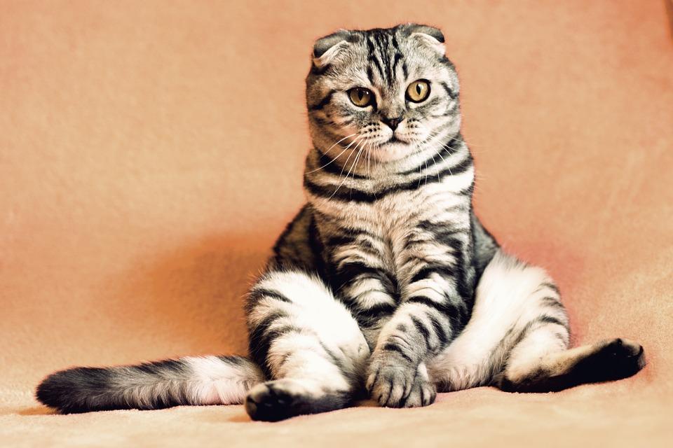 cat-2934720_960_720.jpg