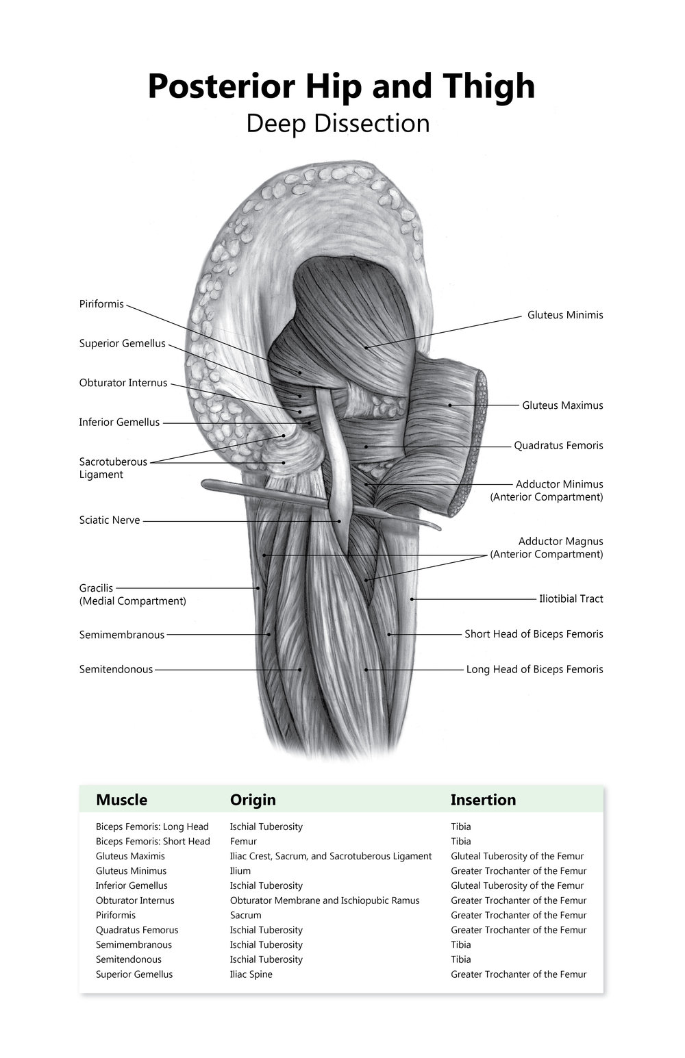 posteriorHip.jpg