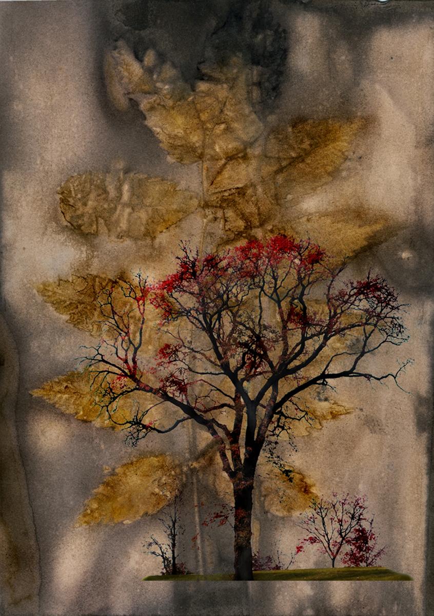 Language of Trees #1, 7 x 5