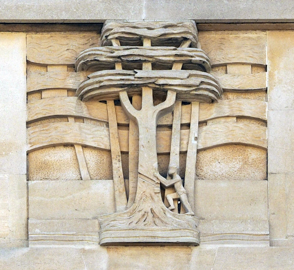 2 rubber tree in stone.jpg