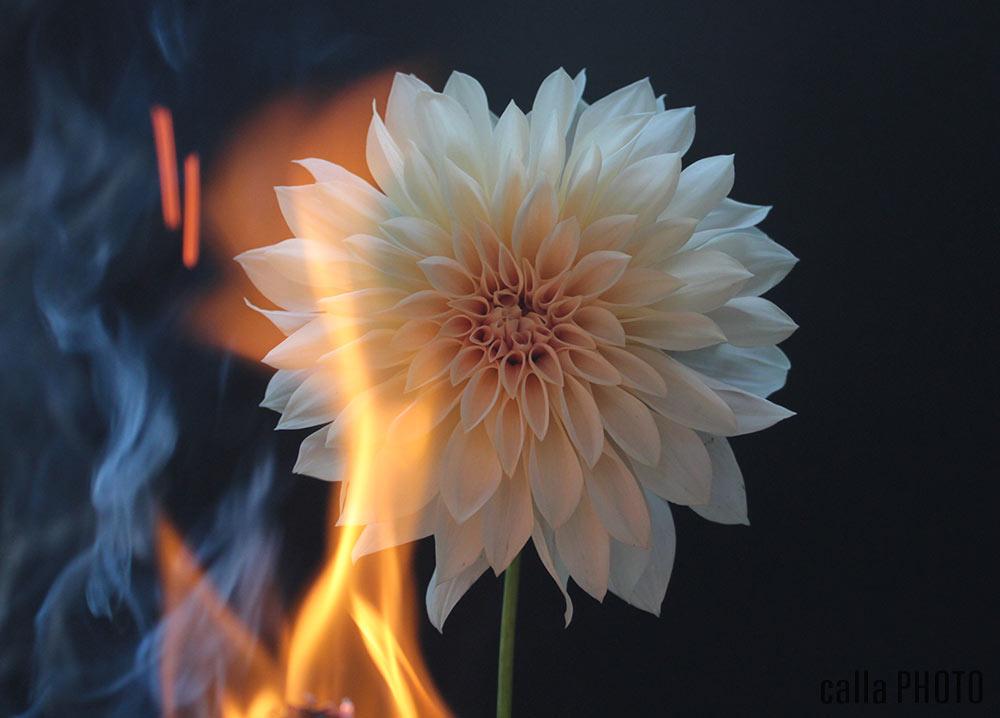 dahlia_fire_01.jpg