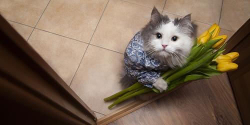 https://bodyandsoulnourishmentblog.files.wordpress.com/2018/06/kitten-offering-flowers.jpg?w=1000&h=500