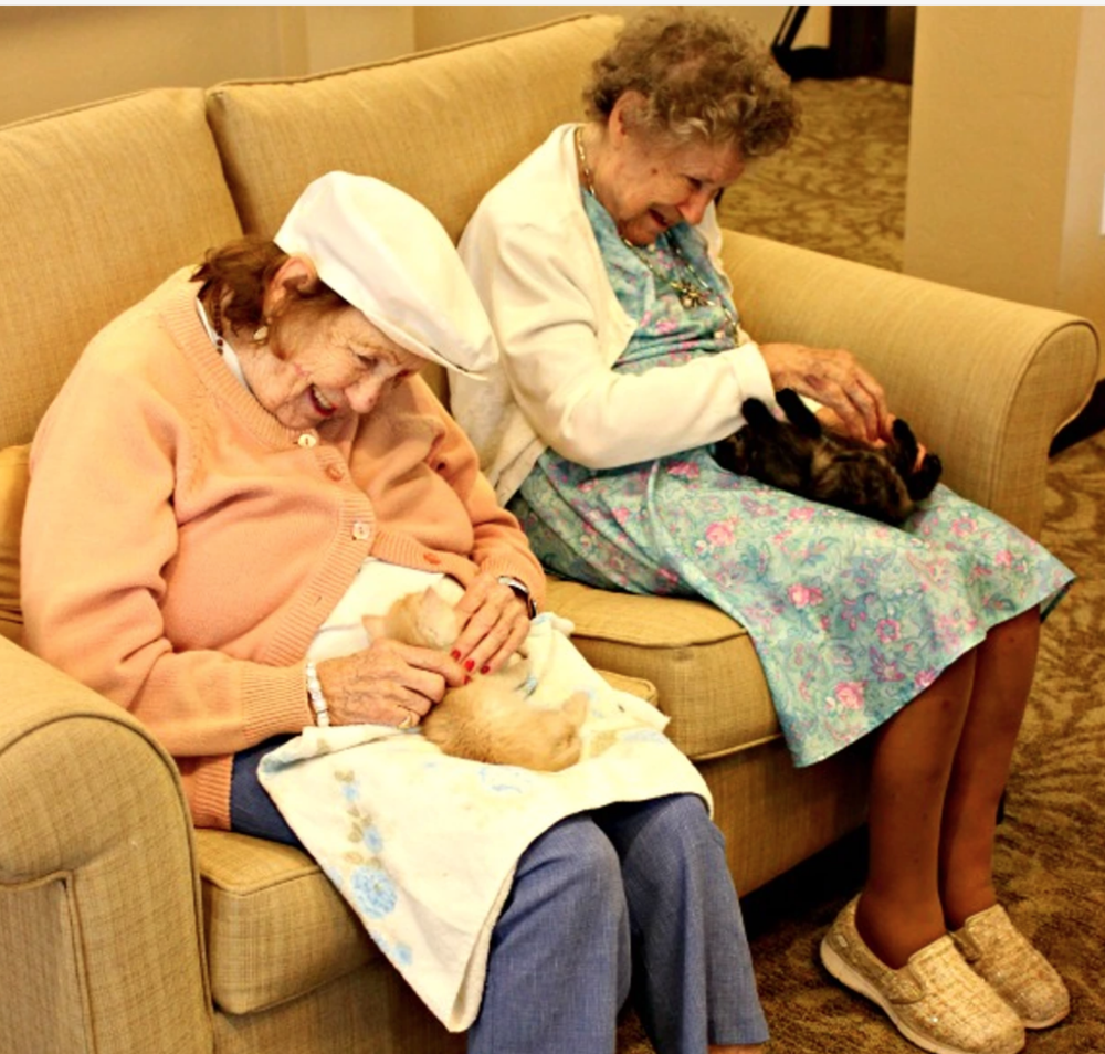 Bottle babies - A nursing home experimental program that pairs seniors in need of round the clock care with kittens that need the same