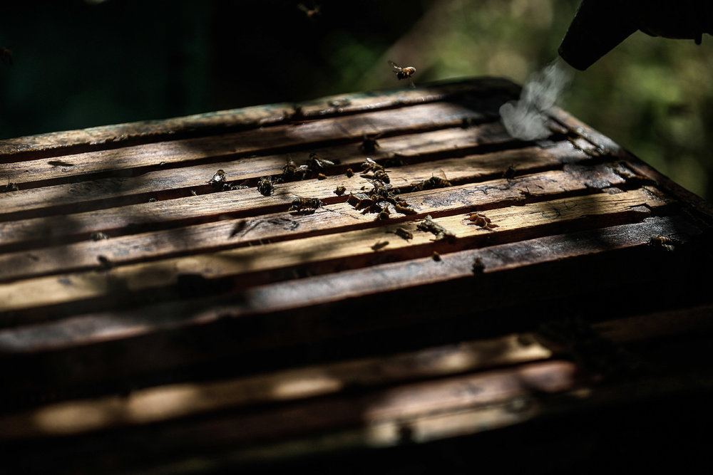 - A beekeeper applies smoke through a smoker to facilitate inspecting hives at a bee farm in the town of Hamouria.