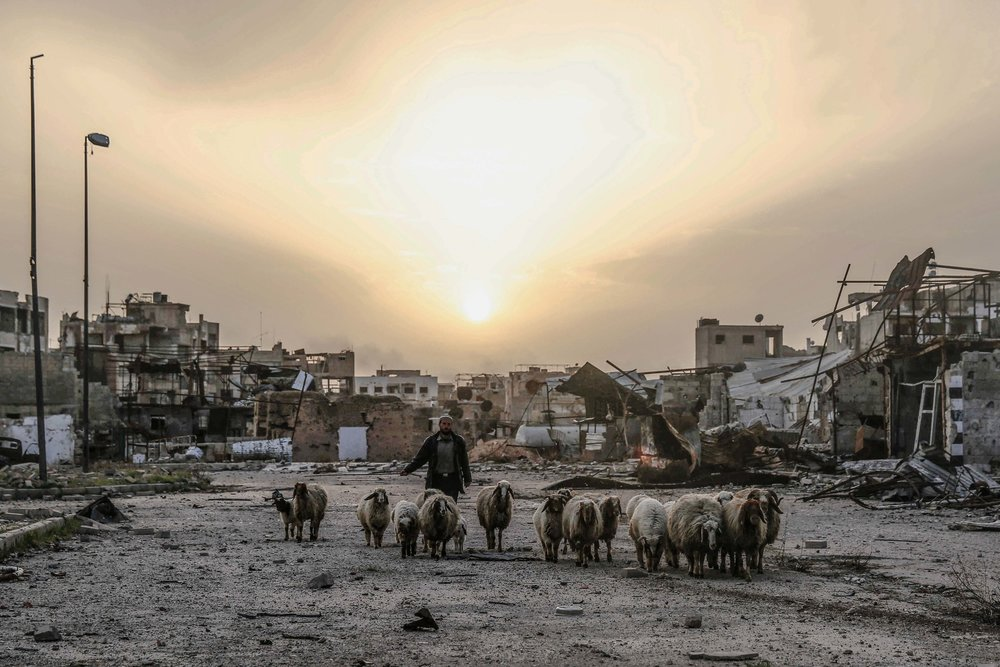 - A man shepherds the sheep in the destroyed neighborhood of Jobar.