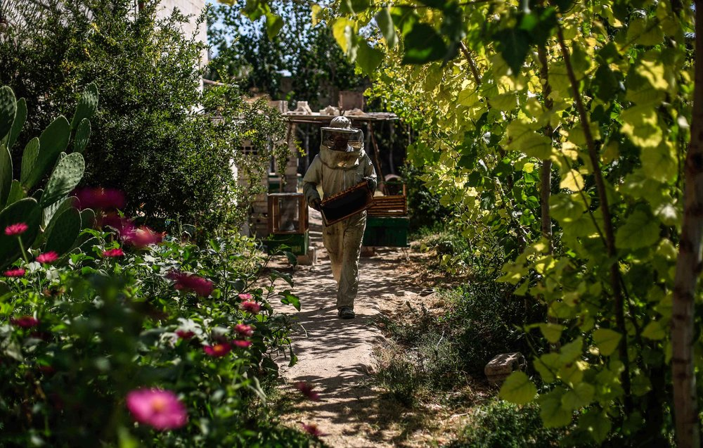 A beekeeper carries hives at a bee farm in the town of Hamouria, in Eastern Ghouta. Apart from being a natural source of energy honey is used as a homoeopathic treatment for burns and wounds.