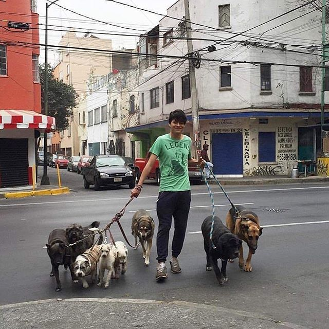 Mexico, 2016.  P.s I want to adopt a dog. . . . . . #lacalleesnuestracolectivo #ourstreets #ihsp #documentaryphotography #nonstopstreet