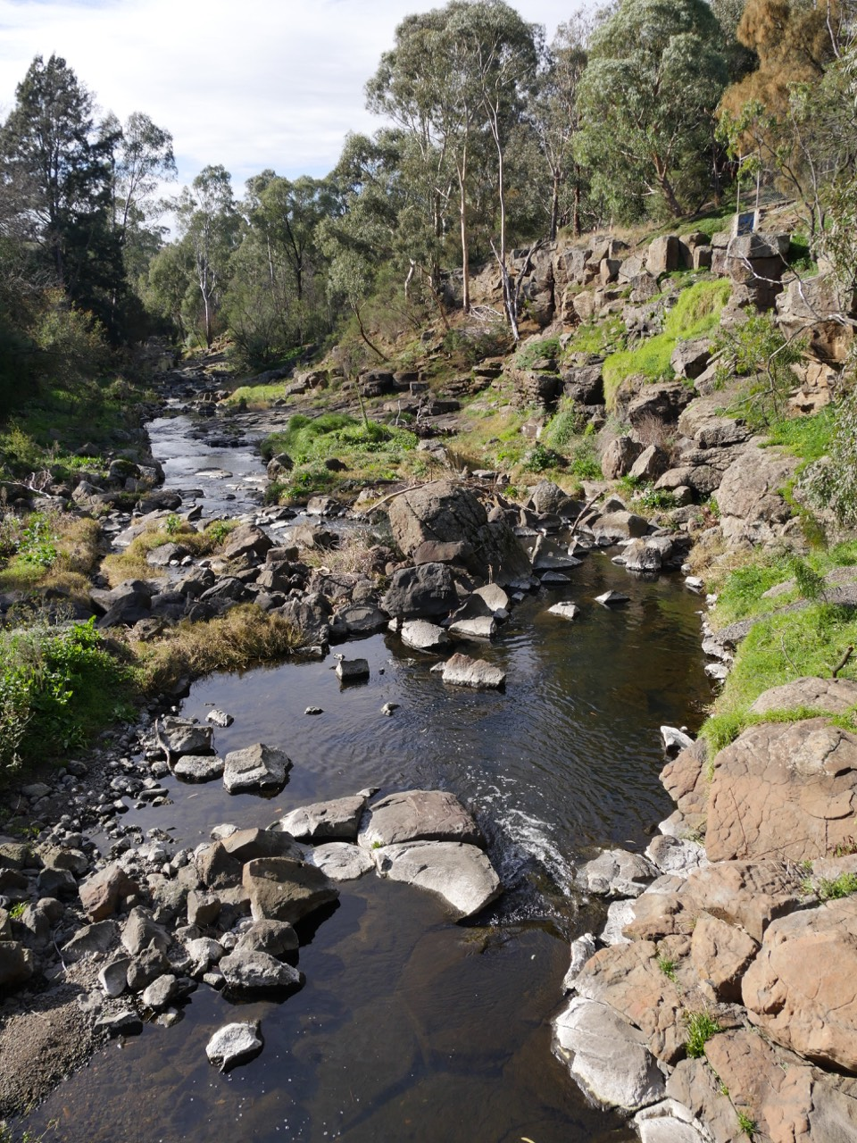Darebin Creek near Darebin Parklands