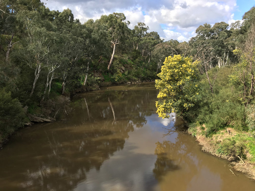 The Yarra River near Odyssey House.