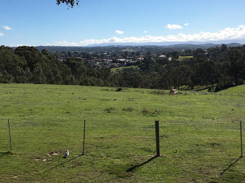 Views towards Kinglake.
