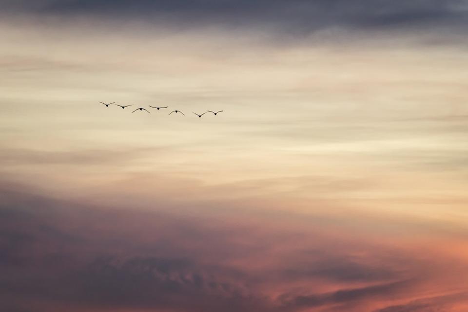 When-Dreams-Take-Flight.jpg