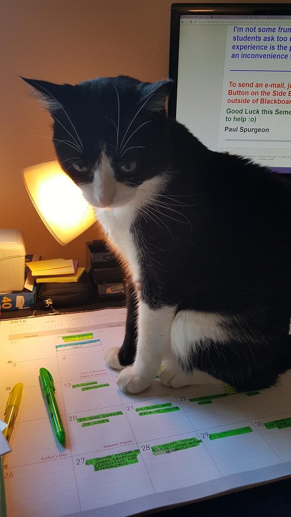homework-cat.jpg