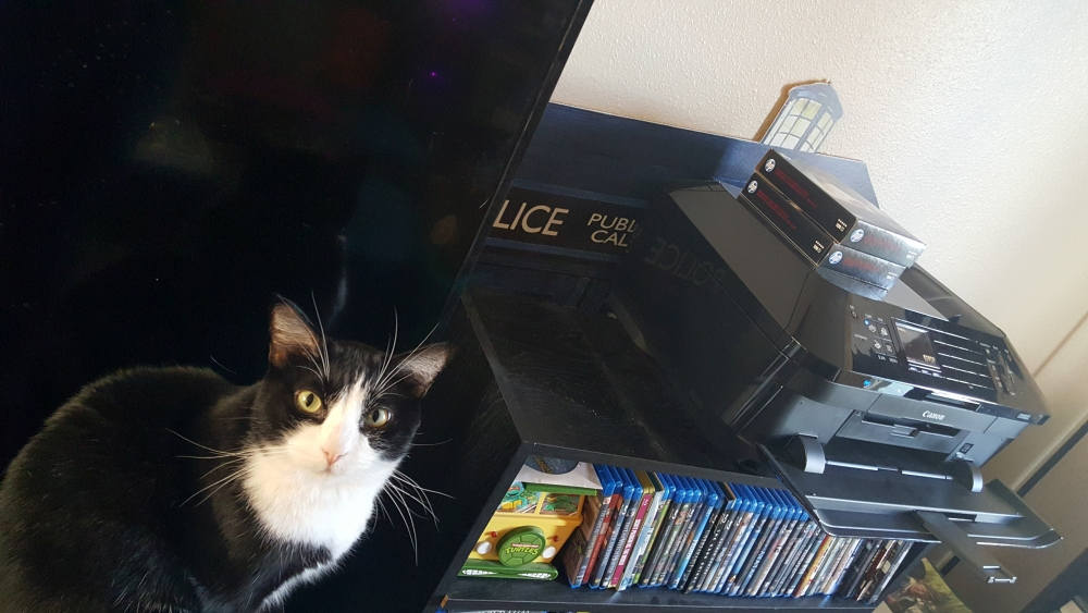 "My cat Boo Boo LOVES to ""watch the printers how"" as it prints off buttons and coasters."