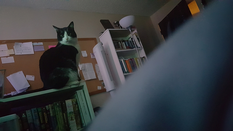 Boo Boo judges me from atop the bookshelf as I pull the covers over my head in an attempt to sleep the day away...