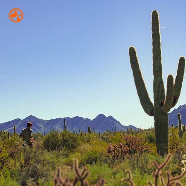 Run in your happy place! 😀🌵🏃‍♂️#liferocks #getout #runtherocks #livefit #liveorange #goexplore #soarnotsore #liferocksfitness #rockonathleticbalm #veganfitness #trailrunning #gorun #runningbliss #running