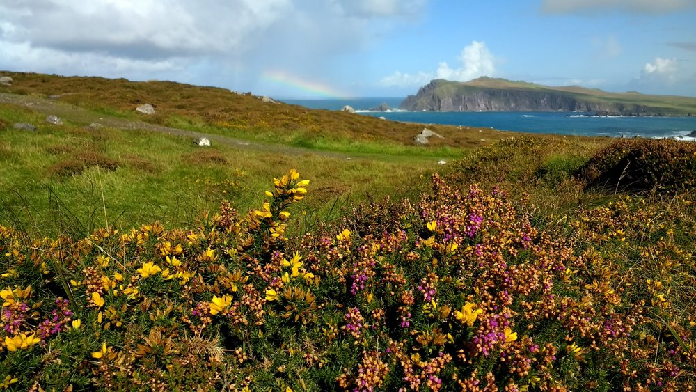 Slea Head Drive, Dingle