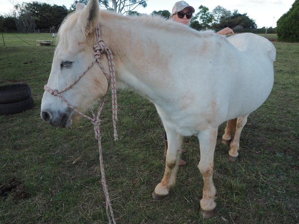 Elderly horses love their Emmett sessions!
