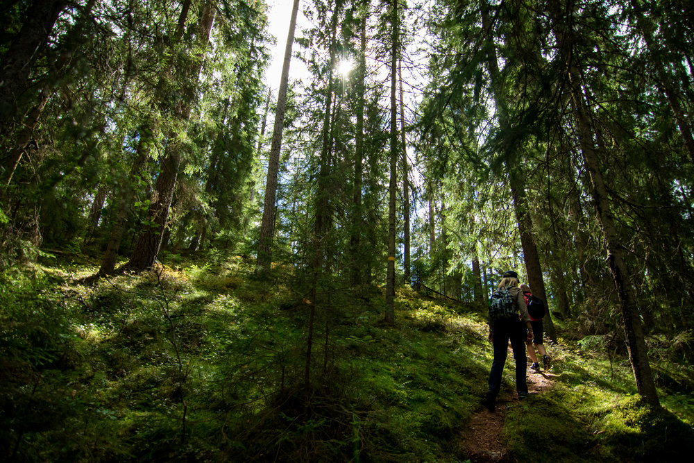 Walking in the forest. Photo: Simon Green