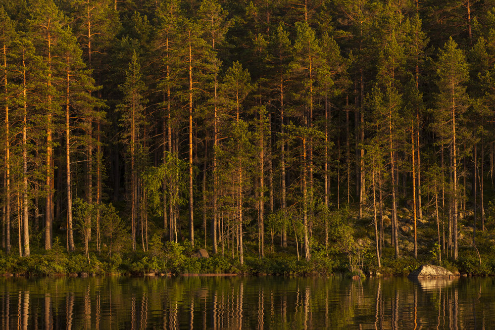 Silent lake and forest. Photo: Marcus Westberg