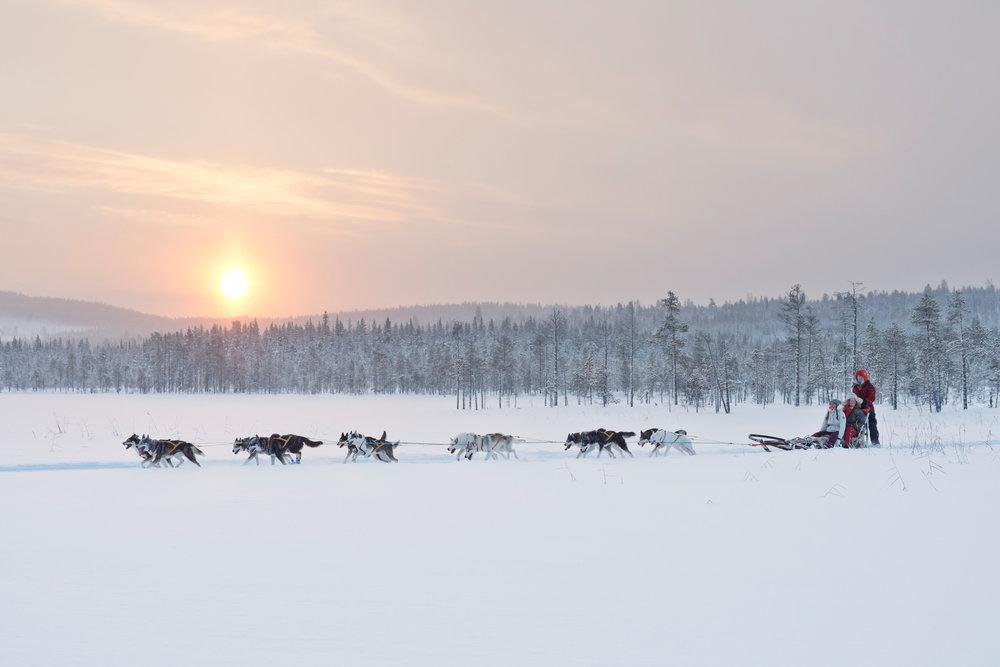 Dog sledding in Jokkmokk. Photo: Anna Öhlund/imagebank.sweden.se
