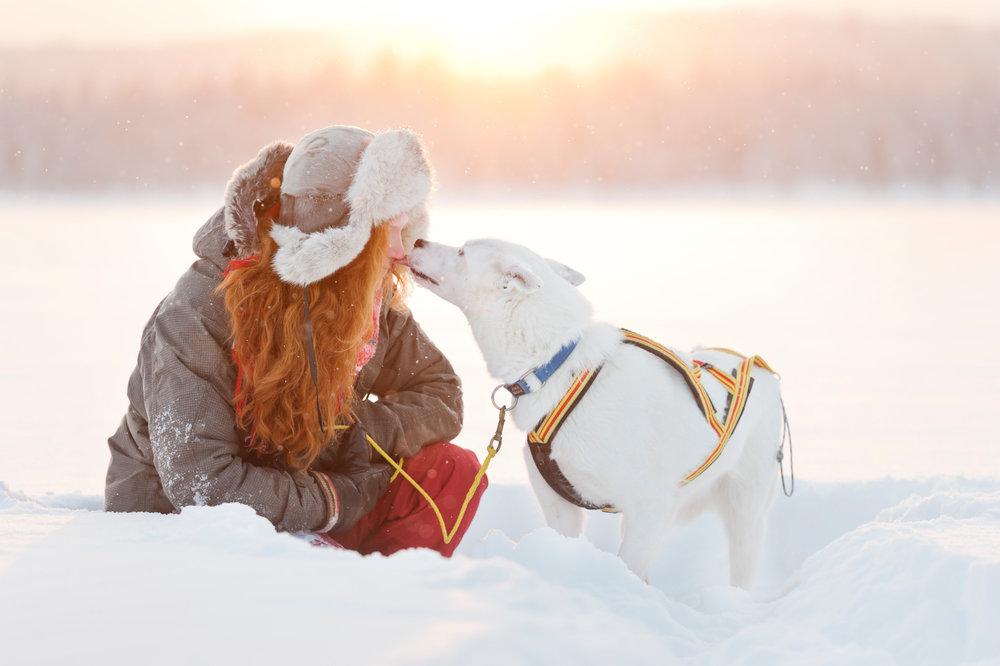 Husky love! Dog sledding in Jokkmokk. Photo: Anna Öhlund/imagebank.sweden.se